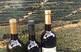 Jo Ma Jo Wine Cellar