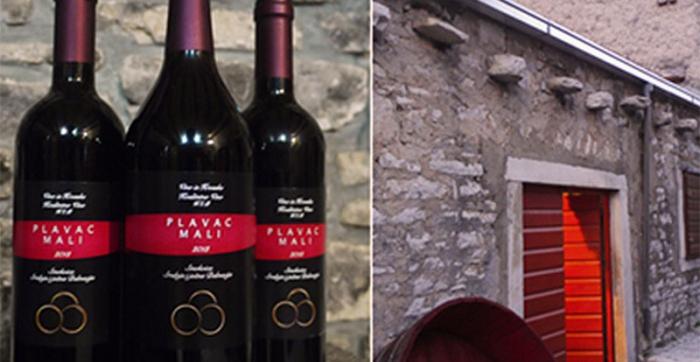 Barbazza Wine cellar Smokvica